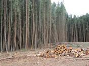 Qu'est-ce l'éthique environnementale rôle dans sauvegarde nature